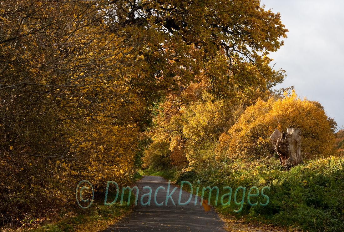 Autumn gold (2)