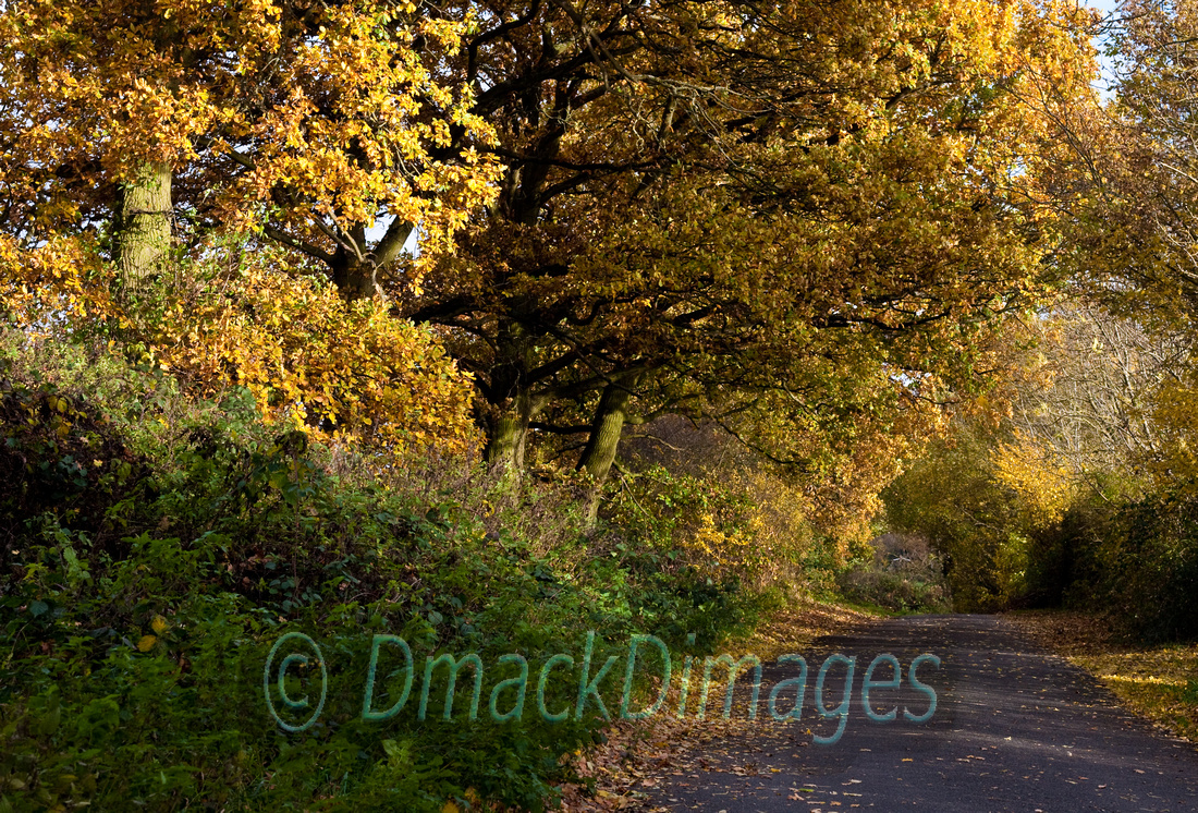 Autumn gold (1)
