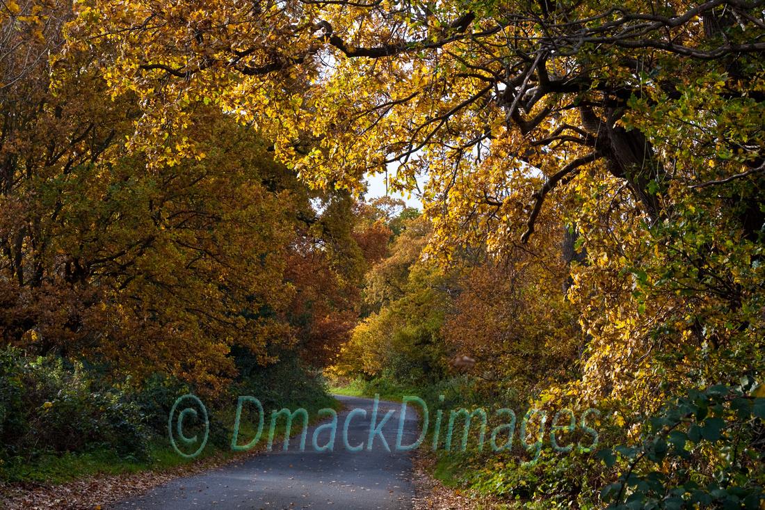 Autumn gold (4)