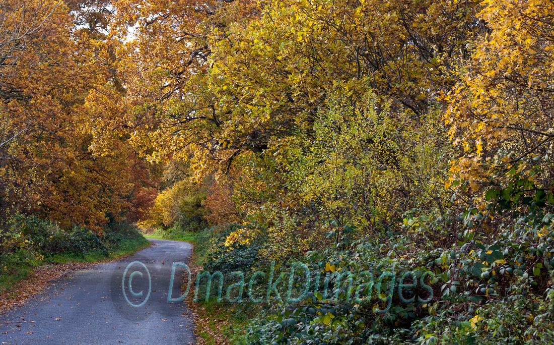 Autumn gold (3)