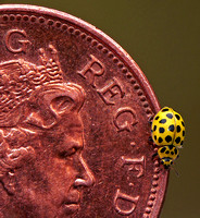 Ladybird on coin