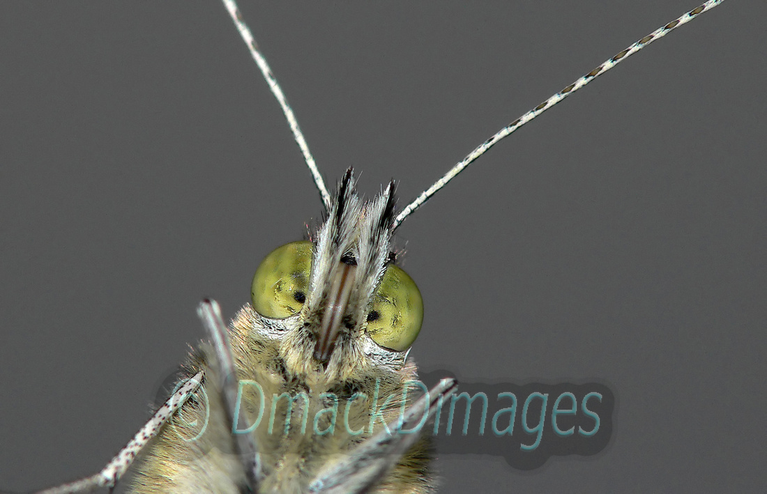 BWPA acknowledged 2010 - cabbage white butterfly